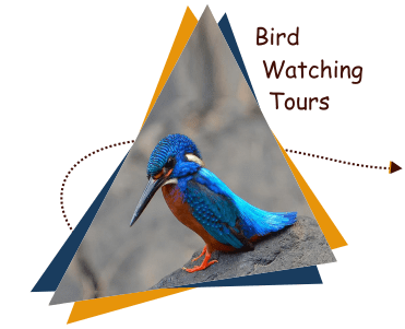bird-watching-tour Goa