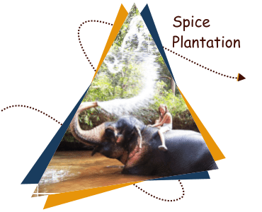 Tropical-spice-plantation