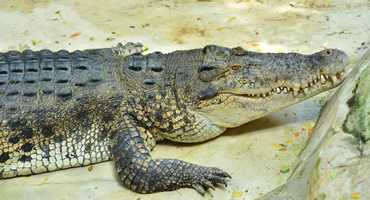 Crocodile and Birdwatching at Goa India