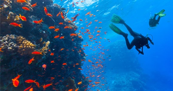 Scuba Diving in Goa, India